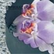 Биметаллические ленточнопильные полотна Honsberg